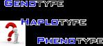 genotype-haplotype-phenotype